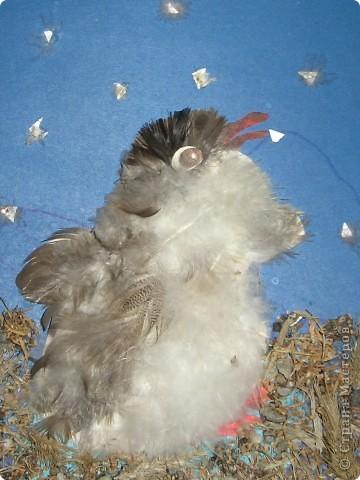 Маленький птенец открывает большой мир. фото 2