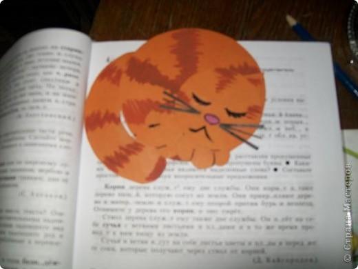 котик фото 5