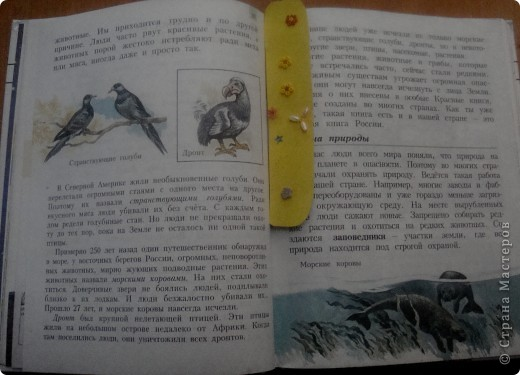 закладка для учебника или тетради по окружающему миру фото 2