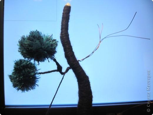 Помпонное  дерево и черепашка-мыслитель.  фото 8