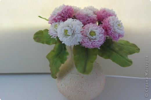 Название свое цветок получил от греческого слова margarites, обозначающего «жемчужина», так как покрывающие зеленые луга бесчисленные ее белые цветочки действительно кажутся как бы жемчужинками.  В северных сагах маргаритка посвящалась еще богине весны, и гирляндой из ее цветов обвивали каждую весну кубок этой богини. Кроме того, цветы ее приносились в жертву богине любви  — Фрее, и потому ей давали нередко название цветка любви и невесты солнца.  В этом последнем названии и приношении цветка в жертву богине любви кроется, по мнению многих ученых, и происхождение известной всем роли этого цветка как любовного оракула.  Эту роль цветка для гадания  — «любит, не любит» маргаритка, по-видимому, начинает играть уже с незапамятных времен и притом не только в одном каком-либо отдельном государстве, а почти во всех западноевропейских, исключая разве Англию. В немецком языке существует даже особое ее народное название  — «Maasliebchen», т. е. мерка любви, которое ведет свое начало с древних времен и имеет своей основой старинную детскую игру, соединенную с обрыванием ее лепестков. фото 1