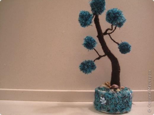 Помпонное  дерево и черепашка-мыслитель.  фото 5