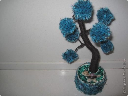 Помпонное  дерево и черепашка-мыслитель.  фото 6