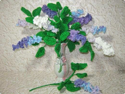 """Сирень - неприхотливое, морозоустойчивое растение.Сирень ассоциируется у нас с весной, свежестью. Пышные, тяжелые грозди сирени, душистое море запахов, прохладное благоухание словно вырастают из зари и тумана.  На Руси сирень называли """"синелью"""", от слова """"синий"""", так как именно синий цвет задает основной ее оттенок. По-французски сирень называют """"lilas"""" - """"лиловый"""". В странах Западной Европы и Америки связывают название растения также с преобладающей окраской цветков - лиловой. В Иране и Турции сирень имеет весьма интересное название - """"лисий хвост"""", возможно, из-за формы соцветий (удлиненные пушистые соцветия напоминают распушенный хвост лисицы). Научное название растения происходит от греческого """"syrinx"""", что означает """"трубка"""", """"дудочка"""". Если из ствола или ветки сирени извлечь мягкую сердцевину, из нее можно сделать дудку, свирель. Согласно греческой мифологии, флейту изобрел бог Пан. Он сделал ее из тростника, в который превратилась спасавшаяся от его преследования красавица нимфа Сиринга.  О праздниках сирени со страниц интернета:   Ежегодно в начале мая в Кралево организуются Дни Сирени. Они проходят в память о событии 13 века, когда король Урош Первый в знак любви к своей французской невесте Елене Анжуйской, будущей сербской королевы решил одеть в цветы душистой сирени всю долину реки Ибар.  С 27 мая в Ботаническом саду Московского университета на Воробьевых горах начинаются регулярные экскурсии в преддверии традиционного """"Сиреневого бала"""", который 29 мая состоится в актовом зале храма святой Татианы.   Праздник сирени проходит и в Солнечногорске. С разных концов страны люди едут в Солнечногорск к И. Ф. Стрекалову, чтобы своими глазами увидеть чудо-сад, едут за саженцами, опытом.    фото 1"""