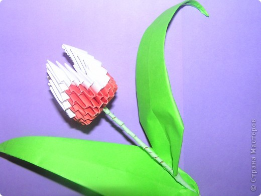 Моя поделка-тюльпан фото 6