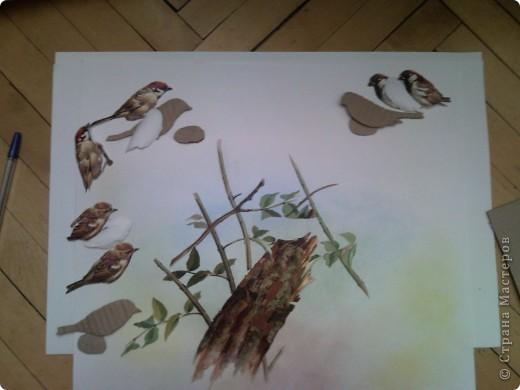 Международный день птиц фото 5