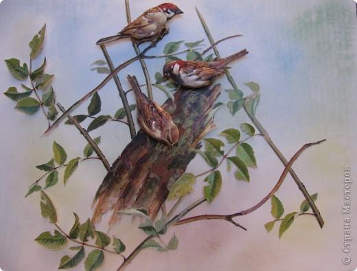 Международный день птиц фото 1