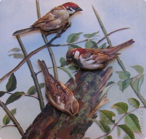 Международный день птиц фото 2