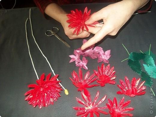 Говорят, что цветок Георгина приносит удачу и счастье. Попробую свою удачу! фото 4