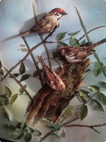 Международный день птиц фото 3
