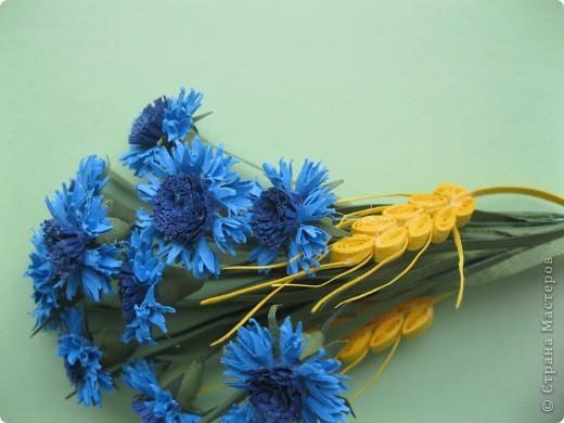В одной из древнеримских легенд говорится, что цветок этот получил свое название в честь синеглазого юноши по имени Цианус, который был поражен его красотой, собирал эти синие цветы и плел из них гирлянды и венки.  фото 3