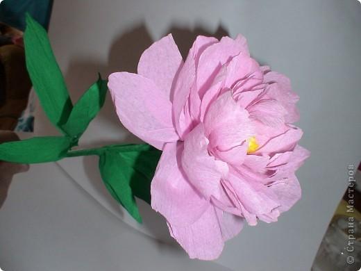 Расцвел в саду любимый мой пион… Наполнил воздух нежным ароматом… Таким родным, знакомым и приятным, что о былом опять напомнил он. Букет пионов в цветочном горшке выполнен из креповой бумаги в технике квиллинга фото 4