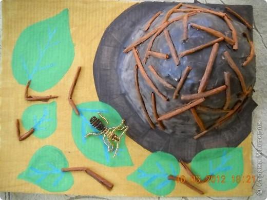Вот мой муравей возле своего муравейника. фото 1