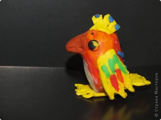 Праздник попугая фото 1