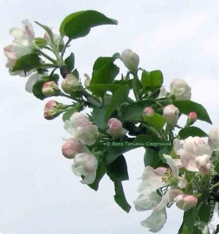 Яблоневый цвет!  Яблони в цвету  Яблони в цвету - весны творенье!  Яблони в цвету - любви круженье!  Радости свои мы им дарили,  С ними о любви мы говорили.  фото 8