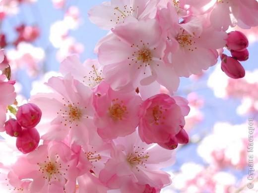 Яблоневый цвет!  Яблони в цвету  Яблони в цвету - весны творенье!  Яблони в цвету - любви круженье!  Радости свои мы им дарили,  С ними о любви мы говорили.  фото 9