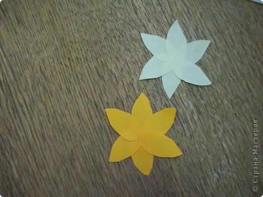 В нашей работе 4 разновидности нарциссов. Среди них есть ярко-желтый нарцисс цикломеновидный. фото 2