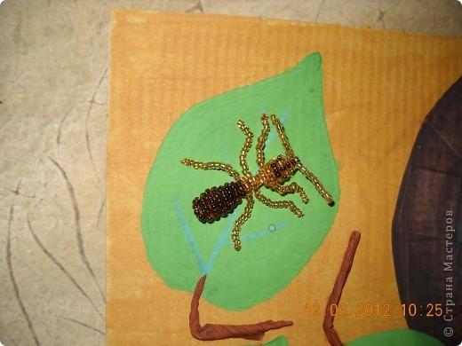 Вот мой муравей возле своего муравейника. фото 2