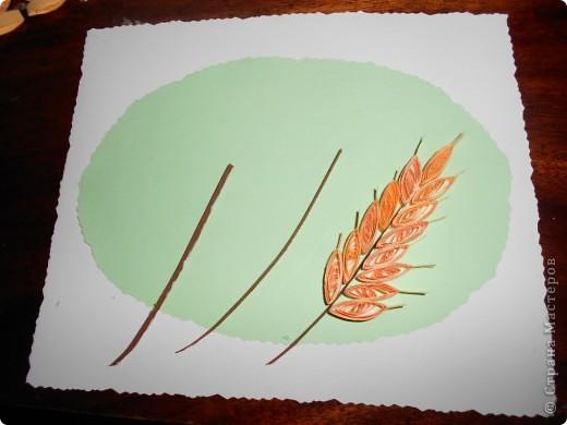 В день Феодосии-колосяницы рожь колосится, выметывает колос. Федосьи-девицы, дак рожь на трубицы, начнет колоситься. Колосится рожь — много грибов найдешь. Не будет за полем — не будет и на поле: не будет урожая грибов да ягод — не будет и хлеба (Пинежье). Рожь две недели зеленеет, две недели колосится, две отцветает, две наливает, две подсыхает. По цвету ржи гадают о цене хлеба: если рожь начинает цвести снизу — будет низкая цена хлебу, если с середины — средняя, если сверху — высокая (Тамбовская губ.). фото 3