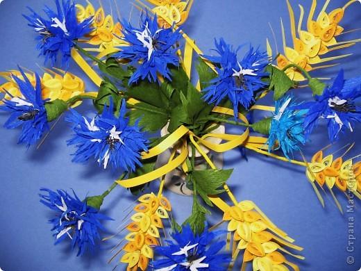Как много полевых цветов, Их все лишь единицы знают, А вот про брызги васильков Стихи и песни сочиняют... В. Кокорев Васильки, символизирующие синий цвет (существуют даже выражения «васильковый цвет», «васильковые глаза»), бывают не только синими, но и розовыми, белыми, пурпурными, лиловыми, желтыми. Род Centaurea насчитывает около 700 видов васильков. Название рода произведено от греческого мифа, согласно которому кентавр Хирон использовал васильки с лечебной целью. Centaurea – цветок кентавра. фото 4