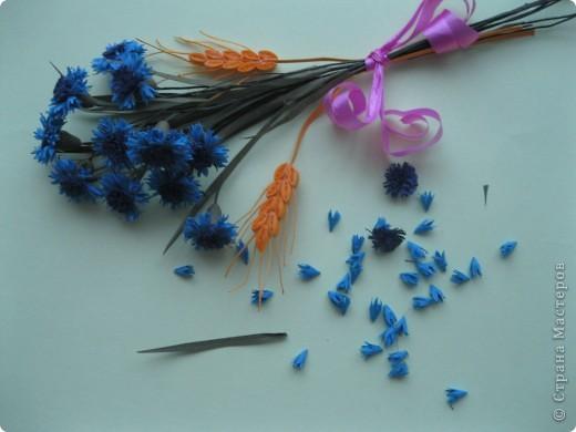 В одной из древнеримских легенд говорится, что цветок этот получил свое название в честь синеглазого юноши по имени Цианус, который был поражен его красотой, собирал эти синие цветы и плел из них гирлянды и венки.  фото 5