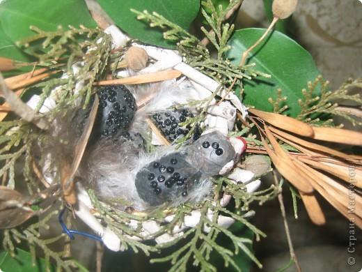 Для конкурса я сделала семью птичек. В гнезде 3 яйца и 1 птенчик, мама и папа соловьи. фото 4