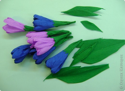 Медуница лекарственная (легочница) (от лат. pulmo — легкие) — многолетнее травянистое растение из семейства бурачниковых. Стебель прямостоячий, высотой 15—30 см, покрыт мягким железистым пушком из волосков. Листья бархатистые, с густым и мягким опушением, прикорневые длинночерешковые, эллиптические, острые, крупные стеблевые более мелкие, сидячие, яйцевидно-ланцетные, острые. Цветки поникающие в многоцветковых кистях, на верхушке стебля собраны щитком, фиолетово-синие, до распускания — розовые. Цветет в апреле — мае. Медонос. фото 3