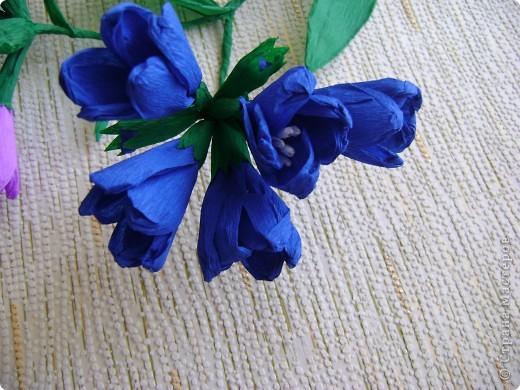 Медуница лекарственная (легочница) (от лат. pulmo — легкие) — многолетнее травянистое растение из семейства бурачниковых. Стебель прямостоячий, высотой 15—30 см, покрыт мягким железистым пушком из волосков. Листья бархатистые, с густым и мягким опушением, прикорневые длинночерешковые, эллиптические, острые, крупные стеблевые более мелкие, сидячие, яйцевидно-ланцетные, острые. Цветки поникающие в многоцветковых кистях, на верхушке стебля собраны щитком, фиолетово-синие, до распускания — розовые. Цветет в апреле — мае. Медонос. фото 5