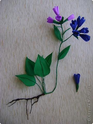 Медуница лекарственная (легочница) (от лат. pulmo — легкие) — многолетнее травянистое растение из семейства бурачниковых. Стебель прямостоячий, высотой 15—30 см, покрыт мягким железистым пушком из волосков. Листья бархатистые, с густым и мягким опушением, прикорневые длинночерешковые, эллиптические, острые, крупные стеблевые более мелкие, сидячие, яйцевидно-ланцетные, острые. Цветки поникающие в многоцветковых кистях, на верхушке стебля собраны щитком, фиолетово-синие, до распускания — розовые. Цветет в апреле — мае. Медонос. фото 7