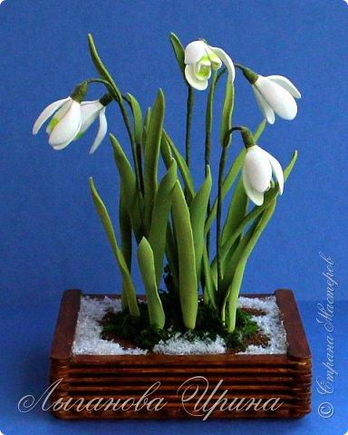 Подснежник - это невысокое красивое растение, которое первым оживает после зимы. Я его видела только на картинках. Впервые живые подснежники  увидела в своей поездке в Финляндию. Этот нежный и такой трепетный цветок рос на обочине дороги. Увидев его я радовалась как ребенок!  фото 1