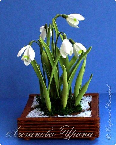 Подснежник - это невысокое красивое растение, которое первым оживает после зимы. Я его видела только на картинках. Впервые живые подснежники  увидела в своей поездке в Финляндию. Этот нежный и такой трепетный цветок рос на обочине дороги. Увидев его я радовалась как ребенок!  фото 2