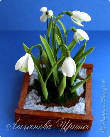 Подснежник - это невысокое красивое растение, которое первым оживает после зимы. Я его видела только на картинках. Впервые живые подснежники  увидела в своей поездке в Финляндию. Этот нежный и такой трепетный цветок рос на обочине дороги. Увидев его я радовалась как ребенок!  фото 3