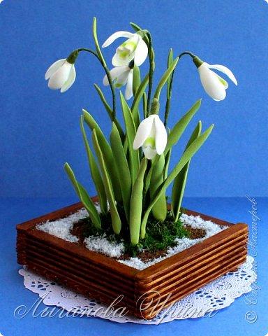 Подснежник - это невысокое красивое растение, которое первым оживает после зимы. Я его видела только на картинках. Впервые живые подснежники  увидела в своей поездке в Финляндию. Этот нежный и такой трепетный цветок рос на обочине дороги. Увидев его я радовалась как ребенок!  фото 6