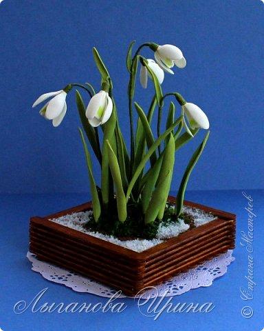 Подснежник - это невысокое красивое растение, которое первым оживает после зимы. Я его видела только на картинках. Впервые живые подснежники  увидела в своей поездке в Финляндию. Этот нежный и такой трепетный цветок рос на обочине дороги. Увидев его я радовалась как ребенок!  фото 7