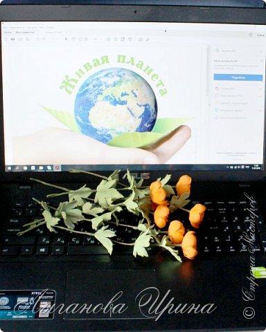 Многие мои друзья знают, что я очень люблю желтый и оранжевый цвет. Поэтому при выборе растения из Красной Книги, мы с Аришкой выбрали замечательный оранжевый цветочек - Купальница Азиатская.  Купальница азиатская - растение с ярко-оранжевыми цветками. фото 5