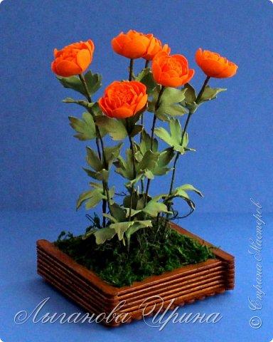 Многие мои друзья знают, что я очень люблю желтый и оранжевый цвет. Поэтому при выборе растения из Красной Книги, мы с Аришкой выбрали замечательный оранжевый цветочек - Купальница Азиатская.  Купальница азиатская - растение с ярко-оранжевыми цветками. фото 2