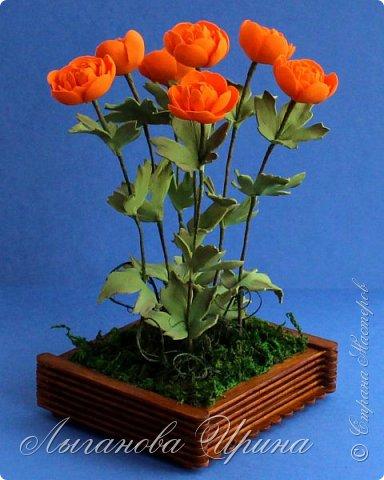 Многие мои друзья знают, что я очень люблю желтый и оранжевый цвет. Поэтому при выборе растения из Красной Книги, мы с Аришкой выбрали замечательный оранжевый цветочек - Купальница Азиатская.  Купальница азиатская - растение с ярко-оранжевыми цветками. фото 1
