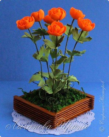Многие мои друзья знают, что я очень люблю желтый и оранжевый цвет. Поэтому при выборе растения из Красной Книги, мы с Аришкой выбрали замечательный оранжевый цветочек - Купальница Азиатская.  Купальница азиатская - растение с ярко-оранжевыми цветками. фото 7