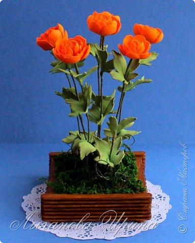 Многие мои друзья знают, что я очень люблю желтый и оранжевый цвет. Поэтому при выборе растения из Красной Книги, мы с Аришкой выбрали замечательный оранжевый цветочек - Купальница Азиатская.  Купальница азиатская - растение с ярко-оранжевыми цветками. фото 6