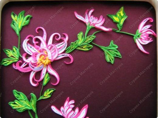 Хризантемы - цветы осени фото 3