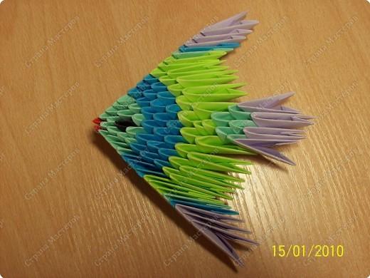 А вот и мой первый мастер-класс! Ура-ура! =) Заинтересуясь этой техникой, я решила воодушевить вас на подвиги и сделать вместе со мной вот такую скалярию! Делается она достаточно просто, особенно по сравнению с объемными фигурами, исполненными в технике модульного оригами!  фото 1