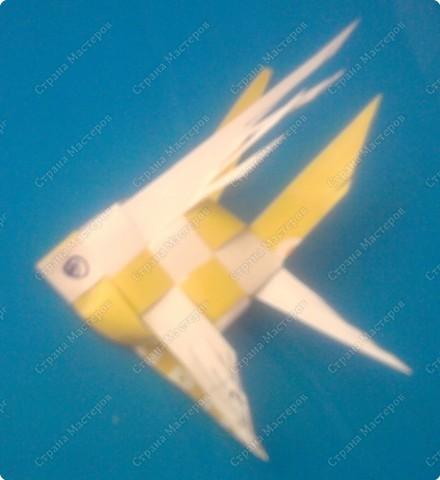 Делюсь эксклюзивчиком! Т.к. таких рыбок я и их схем я еще не встречала ни в инете ни в жизни.   фото 18