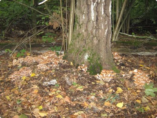 вот решили пойти за грибами фото 7