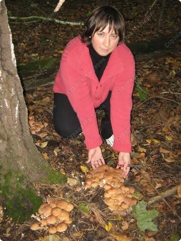 вот решили пойти за грибами фото 9