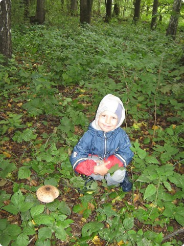вот решили пойти за грибами фото 14