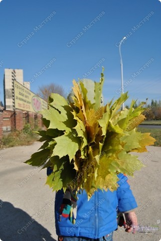 Пришла прекрасная осенняя пора, Прошли дожди, настало бабе лето. На солнце заискрилася листва, Деревья, словно в золото одеты. Лес замер, тишина и благодать, Берёзы в праздничном наряде. Вот и листья стали опадать, Кружась в осеннем листопаде.  Провели мы свои выходные в отдыхе и с пользой... фото 13