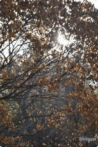 Пришла прекрасная осенняя пора, Прошли дожди, настало бабе лето. На солнце заискрилася листва, Деревья, словно в золото одеты. Лес замер, тишина и благодать, Берёзы в праздничном наряде. Вот и листья стали опадать, Кружась в осеннем листопаде.  Провели мы свои выходные в отдыхе и с пользой... фото 5