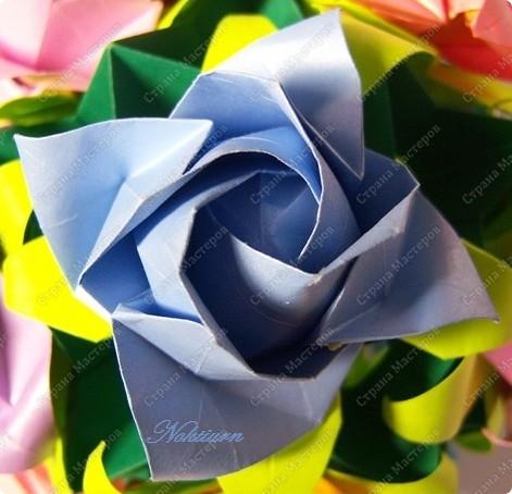 Это Роза Фукуяма, вариация Розы Кавасаки. фото 2