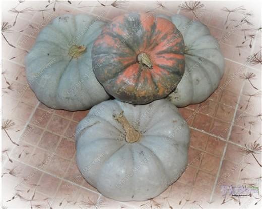 Уродился урожай - Собирай дары природы! В холод, в стужу, в непогоду Пригодится урожай!   Собирали мы семьей на своем огороде урожай и вот какой он вырос!!! Самая большая дыня выросла до 23 см, а кабачок - 50 см!!! фото 9