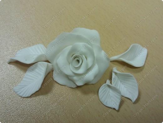 Просмотрела много работ мастеров, разные есть розы...... хочу поделиться как я делаю свои фото 9